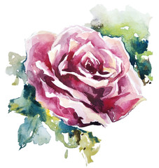 watercolor rose. Flower painting. Vector EPS 10.