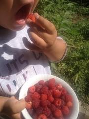 doğal besinler yemek