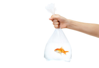 Hand holding a plastic bag with golden fish in it
