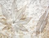 Fototapety Leaf cement