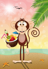 Monkey with coconut fruits on the beach