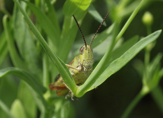 close up of grasshopper sitting in grass