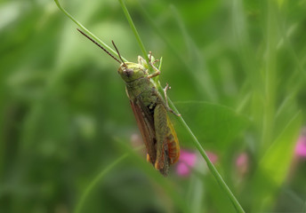 close up of grasshopper sitting on blade