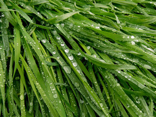green grass background with raindrops