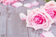 canvas print picture - pink roses on table