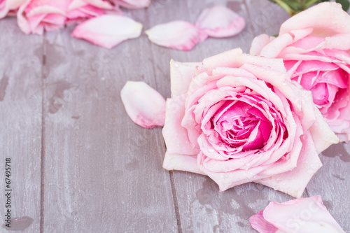 canvas print picture pink roses on table