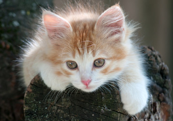 Kitten lying in a tree