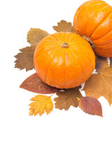 orange pumpkin on autumn leaves isolated and space for text
