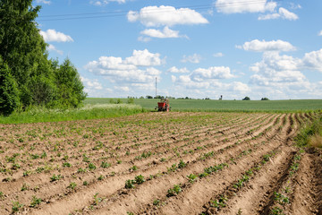 rural tractor plough potato plants in field