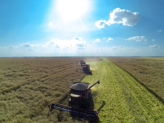 Combine harvesters on colza field. Aerial view by a drone