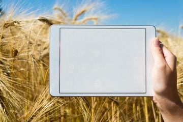 Tablet im Gerstenfeld