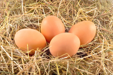 Eggs in hay