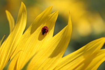 Ladybug & Sunflower