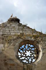 nido con tres cigüeñas en una iglesia en ruinas