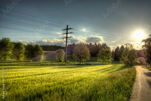 canvas print picture Weizenfeld in goldener Abendsonne