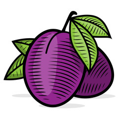 Plum engraving vintage color illustration