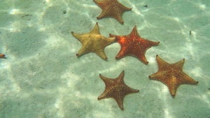 starfish underwater on the sand in Caribbean sea