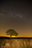 Star scape with lone tree brown grass and Milky Way and soft lig - 67508934