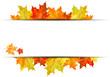 Autumn maple background