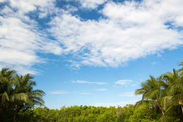 green forest and cloudy blue sky