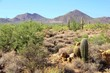 Arizona desert view with mountains near Phoenix