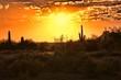 Beautiful sunset view of the Arizona desert with cacti