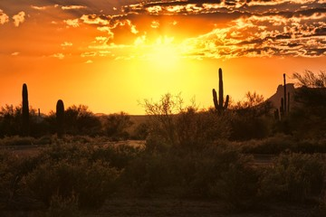 Beautiful sunset view of the Arizona desert with cacti