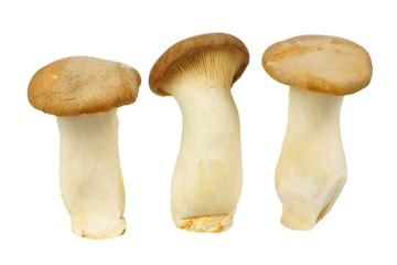 Three large King Oyster mushrooms isolated on white