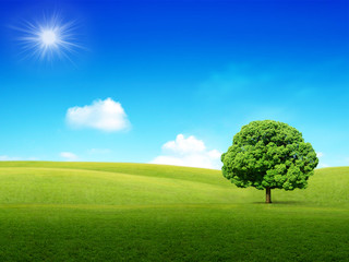 Sunny and green meadow background