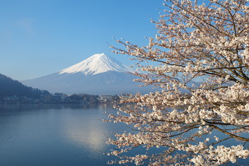 Mountain fuji in cherry blossom sakura season