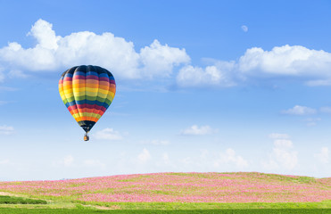 Hot air balloon over pink cosmos fields with blue sky background
