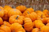 Fototapety pumpkin patch