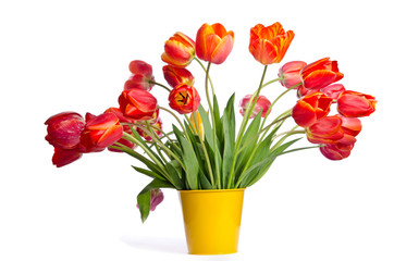 Beautiful bouquet of tulips in yellow pot isolated on white back