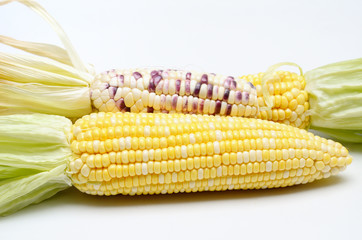 Sweet corn isolated, Close up shot
