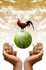 Plant and chicken in the hand, Good organic farm concept