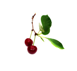 Two cherry on a leaf isolated