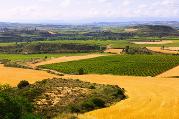 Rural landscape in summer. La Rioja