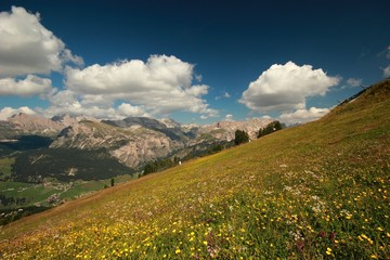 Dolomites - Blooming Meadow