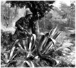 Hunting in Central America - 19th century