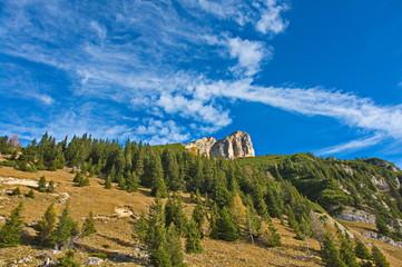 Bergwald an den Dalfazer Wänden, Rofan, Tirol