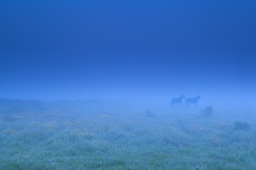 two horse shadows in fog