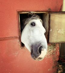 Funny horse looking at window