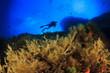 Scuba Diving Mediterranean Sea - 67536515