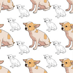Seamless pattern of adorable chihuahua