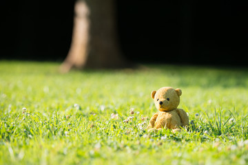 TEDDY BEAR brown color with scarf on the grass