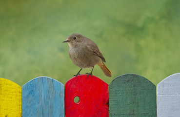 Bird perched on a colorful fence