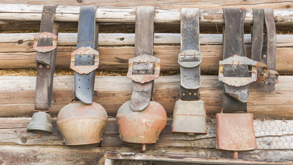 Glocken, Ziegenglocken, Bergwelt, Alpen, Sommer