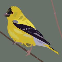 vector bird-