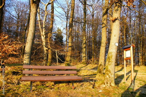 canvas print picture Bank im Wald