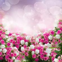 Kilka róż i tulipanów kwiaty